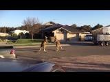 wild kangaroo street fight Aussie style