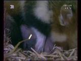 Тайная жизнь Европейских млекопитающих Хомяк